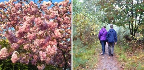 bloesem wandeling