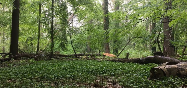 Wandelcoachen in het bos