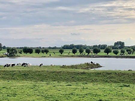 Bezielde eenvoud Hilde Backus koeien aan de rivier