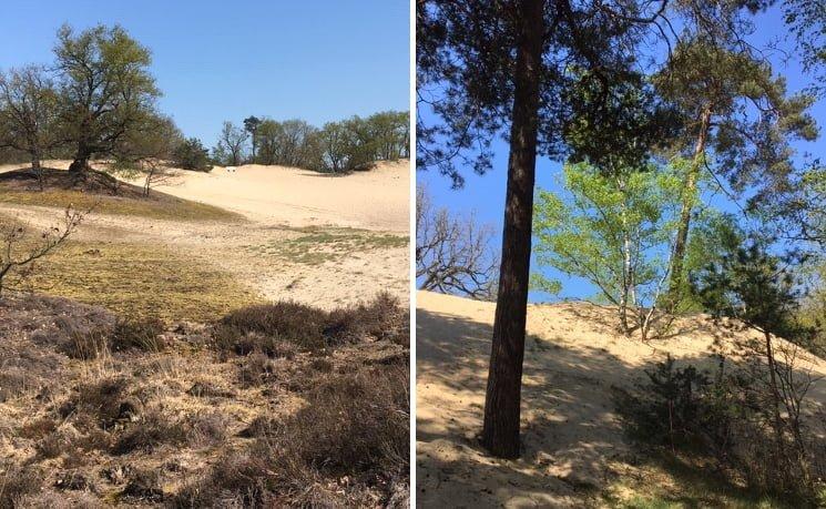 Loonse en Drunense duinen - Bernadette van de Laak