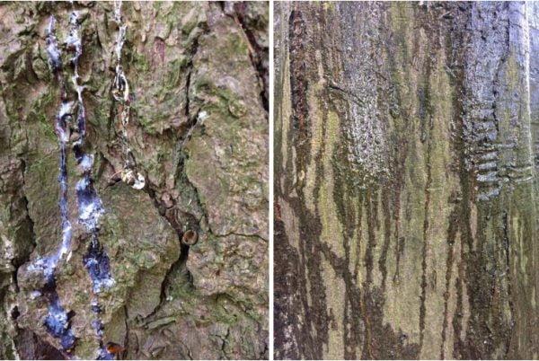 persoonlijk bomenverhaal boombasthuil