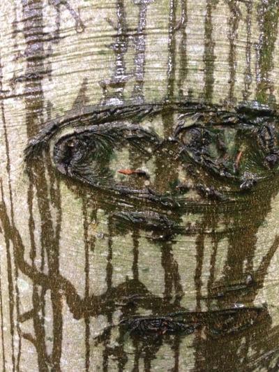 persoonlijk bomenverhaal boomhuil1