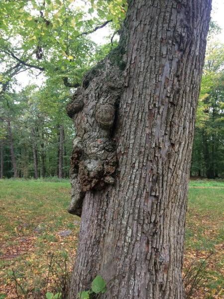 persoonlijk bomenverhaal boomknoest