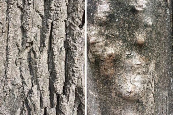persoonlijk bomenverhaal boomschors