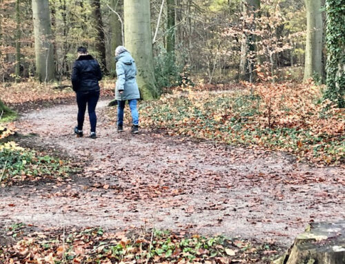 De psychologie van het (samen) wandelen: over gevoel, cognitie en gedrag