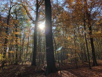 herfst amelisweerd zon boom
