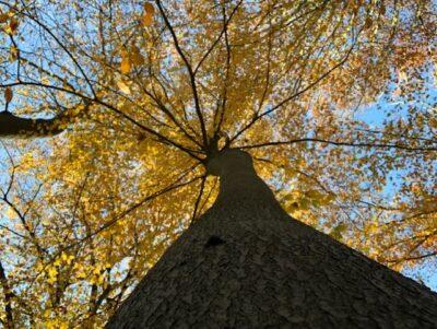 herfst amelisweerd zon boomkruin